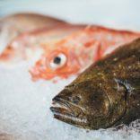 ヒラメなどの魚